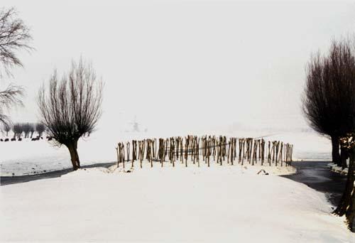 . the iron pollard | de ijzeren knot - pollarded willow spiral - 1992 willows (Salix Alba) - Hardinxveld | Giessendam NL - landscapes and sculptures by Lucien den Arend - his Finnish and Dutch sculpture
